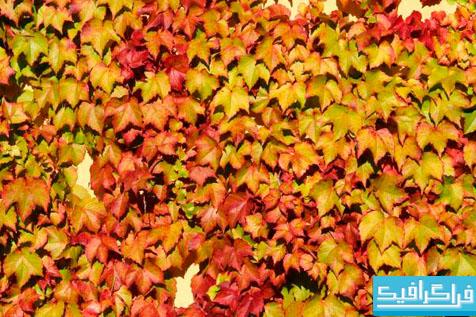 تکسچر برگ های پاییزی