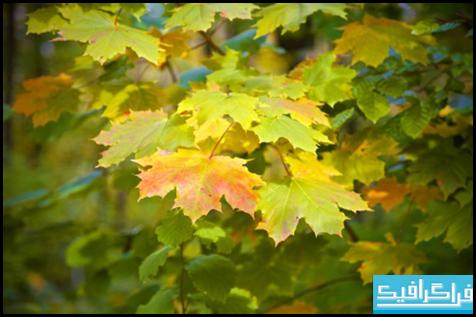 دانلود والپیپر پاییز Autumn Again