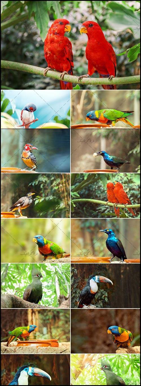 دانلود تصاویر استوک پرندگان زیبا و نادر