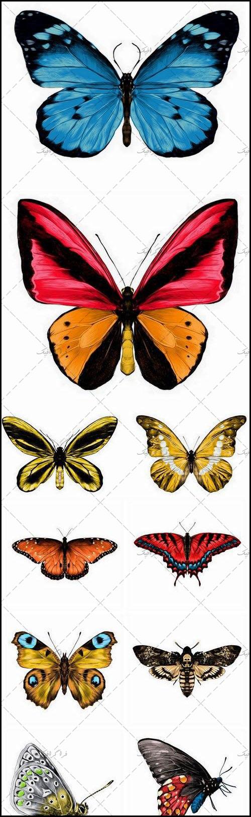 دانلود وکتور های پروانه طراحی واقعی - رایگان