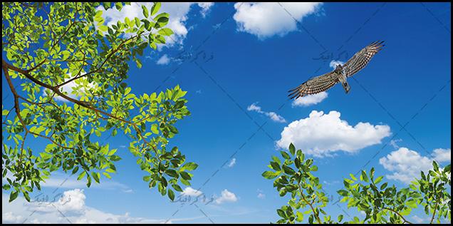 تصویر آسمان مجازی - طرح درخت - پرنده