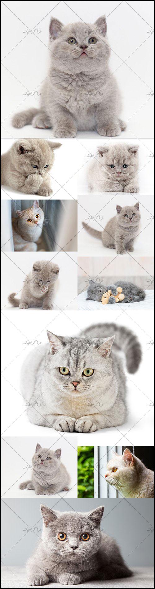 دانلود تصاویر استوک گربه کوچک پشمالو - رایگان