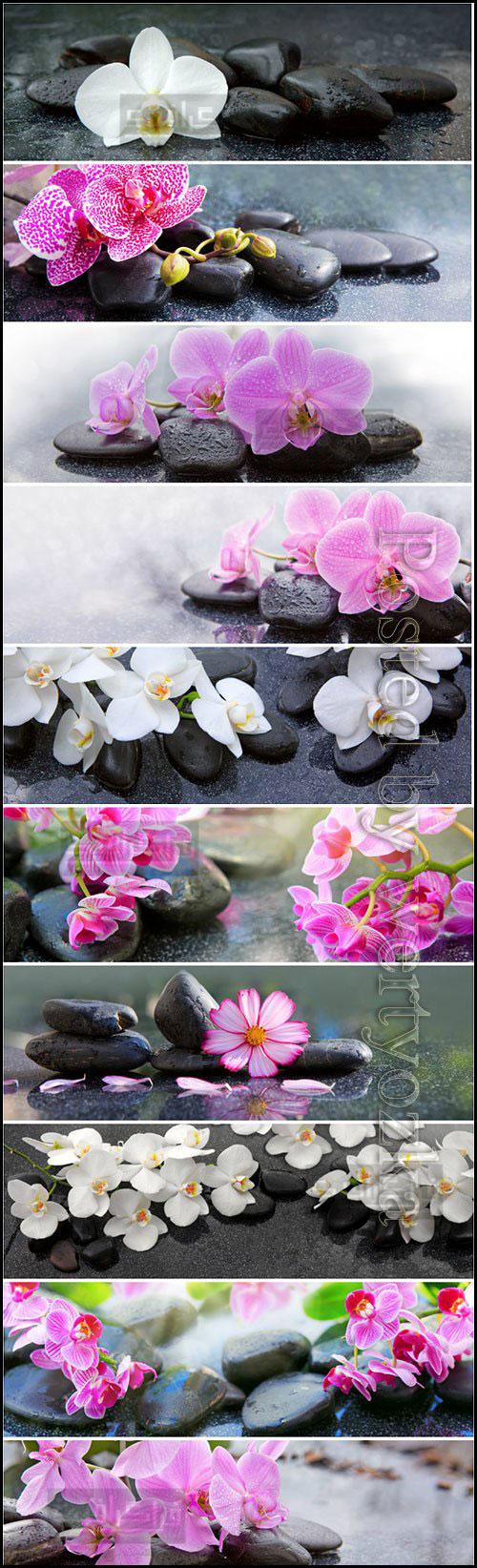 دانلود تصاویر استوک گل و سنگ اسپا