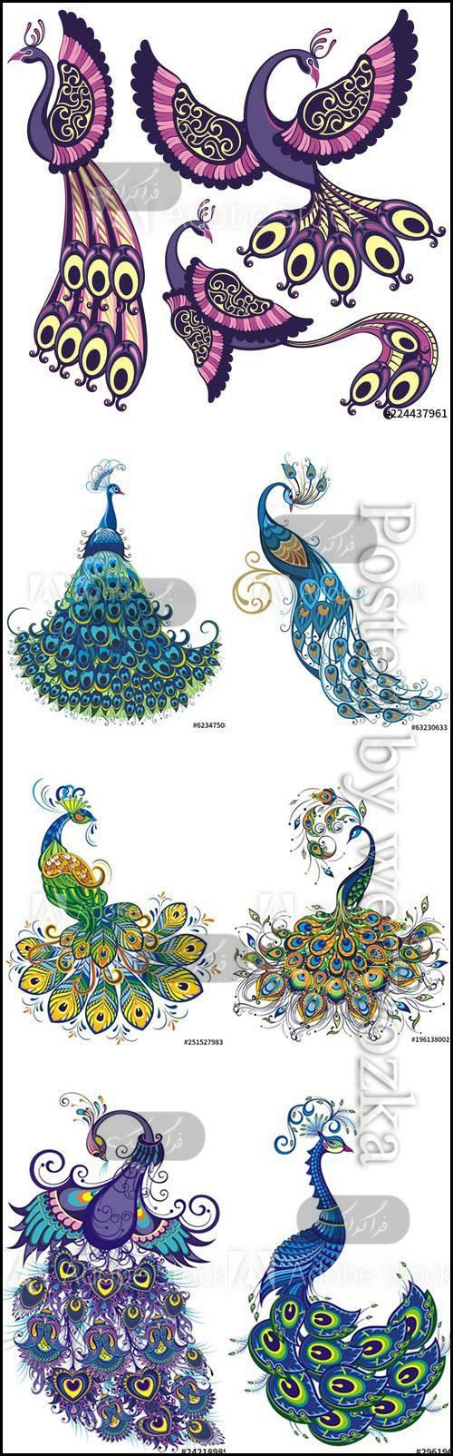 دانلود وکتور های طاووس هنری