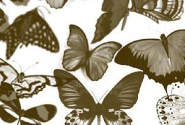 دانلود براش فتوشاپ پروانه