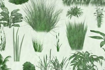 دانلود براش فتوشاپ گیاهان