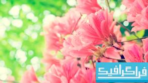 دانلود والپیپر شکوفه درختان