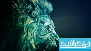 دانلود والپیپر شیر Lion