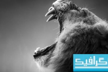 دانلود تصاویر استوک حیوانات وحشی آفریقایی