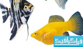 دانلود تصاویر استوک ماهی های آکواریوم