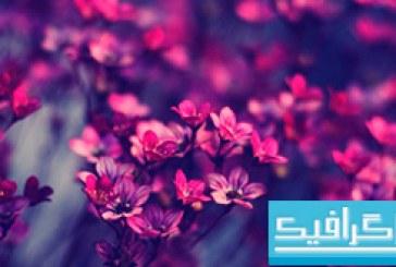 دانلود والپیپر گل Purple Wild Flowers