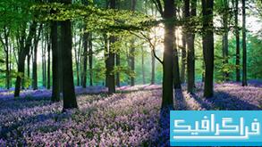 دانلود والپیپر جنگل Violet Forest