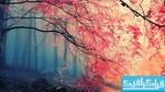 دانلود والپیپر جنگل Forest Fall Colors