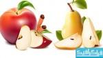 وکتور های میوه - شماره 2