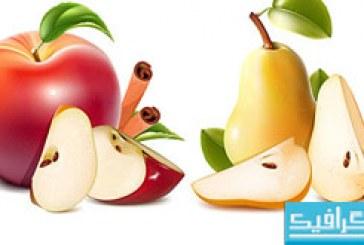 وکتور های میوه – شماره 2