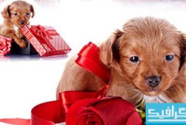 دانلود تصاویر استوک توله سگ کوچک و گل رز