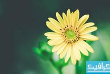 دانلود والپیپر گل Yellow Flower