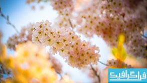 دانلود والپیپر بهار Spring Beauty