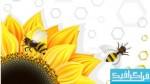 وکتور های زنبور-عسل-گل آفتابگردان