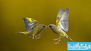 دانلود والپیپر پرنده