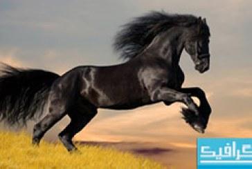 دانلود والپیپر اسب سیاه