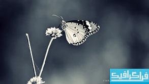 دانلود والپیپر پروانه