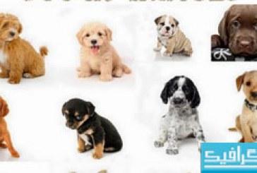 دانلود تصاویر استوک توله سگ