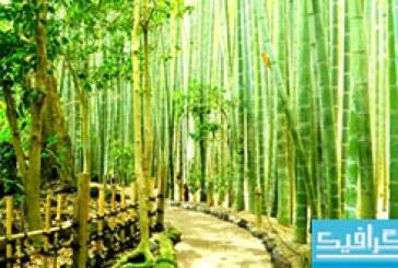 دانلود والپیپر جنگل درختان بامبو در ژاپن