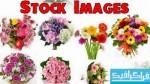 تصاویر استوک دسته گل - شماره 2