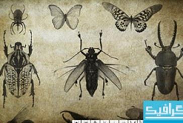 دانلود براش های فتوشاپ حشرات