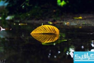 دانلود والپیپر برگ زرد پاییزی