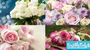 دانلود تصاویر استوک دسته گل رز