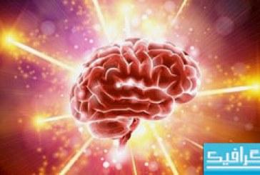 دانلود وکتور های مغز انسان – مفهومی