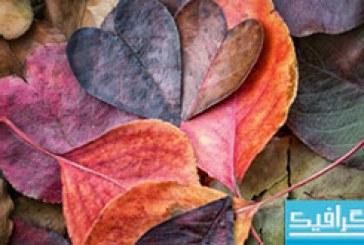 دانلود برگ های پاییزی – عاشقانه