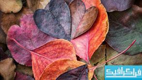 دانلود برگ های پاییزی - عاشقانه