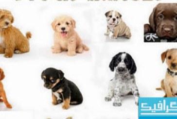 دانلود تصاویر استوک توله سگ – شماره 2