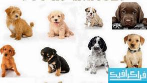 دانلود تصاویر استوک توله سگ - شماره 2