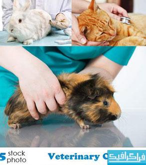دانلود تصاویر استوک کلینیک حیوانات خانگی