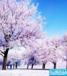 دانلود والپیپر زمستان - شماره 3