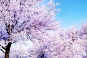 دانلود والپیپر زمستان – شماره 3