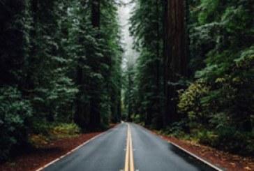 دانلود والپیپر جاده زیبا