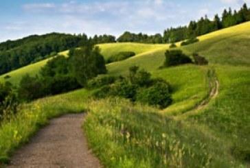 دانلود والپیپر تپه سبز