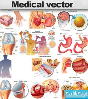 دانلود وکتور های اعضای داخلی بدن
