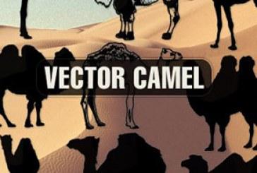 دانلود وکتور های شتر – طرح سایه – Camel
