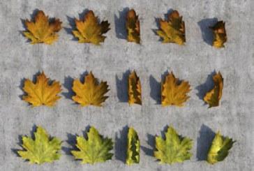دانلود مدل سه بعدی برگ های پاییزی