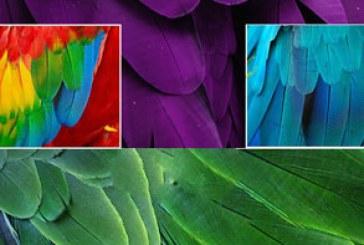 دانلود تکسچر های پر طوطی – Parrot Feather