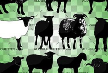 دانلود وکتور های گوسفند – طرح سایه