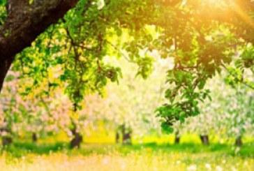 دانلود والپیپر طبیعت بهاری آفتابی