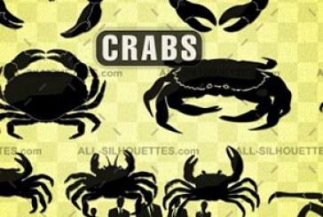 دانلود وکتور های خرچنگ – Crab Vectors