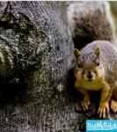 دانلود والپیپر سنجاب - Squirrel Wallpaper